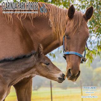 Horse Foals Photo 2017 - Lanercost x Sweet Kelly Marie