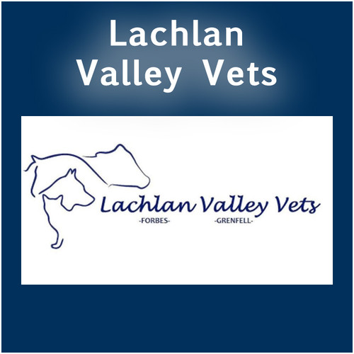 Lachlan Valley Vets