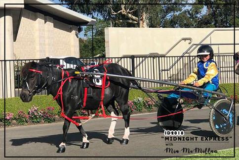 Mini Trots Inter Dominion 2018 - NSW Mini Trots Miniature Division Representative - Mia McMillan driving Midnight Express
