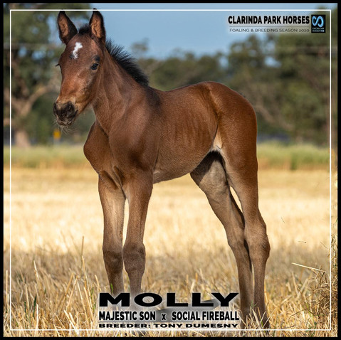 Majestic Son filly out of Social Fireball