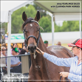 2019 Bathurst Gold Crown Yearlings Sale - CHARLTON, a colt by Heston Blue Chip out of Soho Leigh