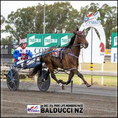 BALDUCCI NZ, driven by Amanda Turnbull, wins at Parkes Trots