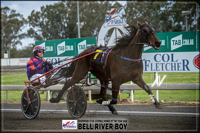 BELL RIVER BOY - Rosewood Stud Juvenile Horse Of The Year 2020