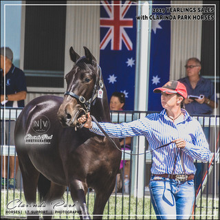 2019 Bathurst Gold Crown Yearlings Sale - FAYE, a filly by Courage Under Fire out of Tanamay