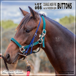 2019 BATHURST GOLD CROWN YEARLINGS SALE - Lot 066