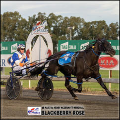BLACKBERRY ROSE wins at the Parkes Trots