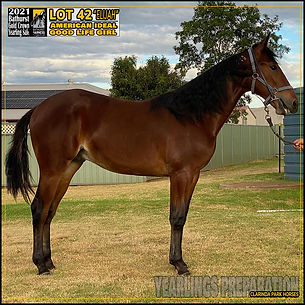 Gold Crown Bathurst Yearlings Sale 2021 - Lot 42 - American Ideal x Good Life Girl