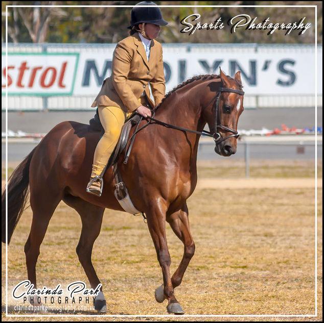 Parkes Show Horse Competition 2017