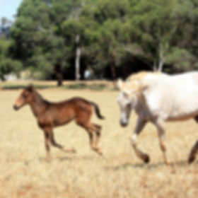 Horse Breeding Season 2015. Horses and foals born during the horse breeding season 2015.