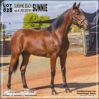 2019 Bathurst Gold Crown Yearlings Sale - Lot 028