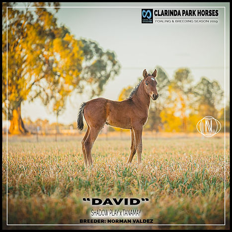 """DAVID"", a colt by Shadow Play and Tanamay, was born during the Horse Breeding Season 2019."