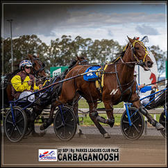 CARBAGANOOSH, driven by Justin Reynolds, wins at Parkes Harness