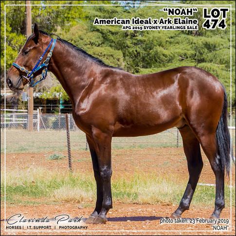 2019223 CLARINDA PARK HORSES - Yearling Sale 2019 - APG 2019 - Noah - 3rd Bath - 004