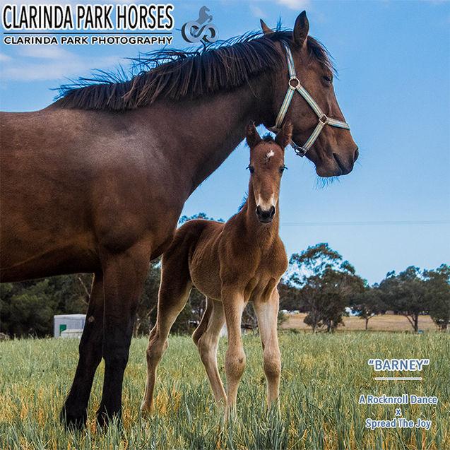 "Horse Foals Photo 2017 - ""BARNEY"" - ARocknroll Dance x Spread The Joy"