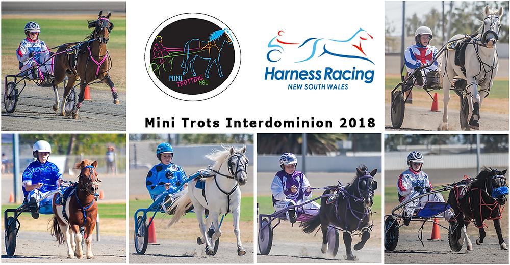 NSW Mini Trots Inter Dominion 2018 representatives | HRNSW | ID18 Mini Trots