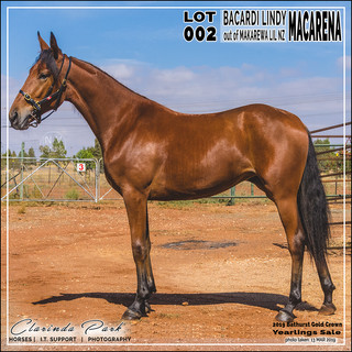 2019 Bathurst Gold Crown Yearlings Sale - Lot 002