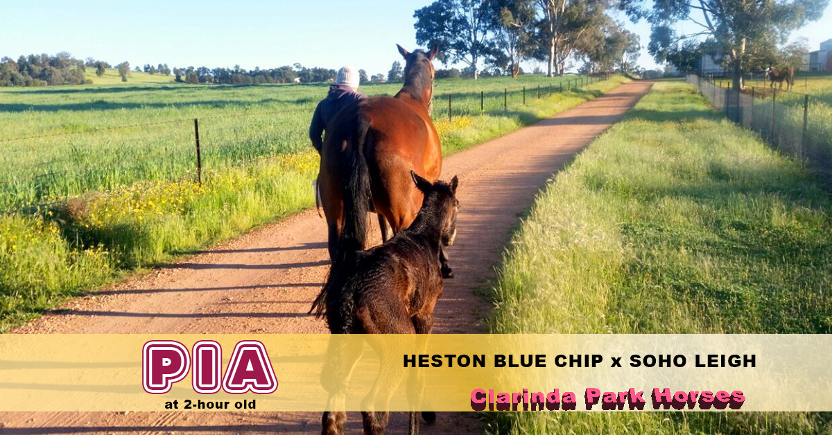 PIA - Heston Blue Chip x Soho Leigh