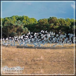 Birds Photo at the Paddock