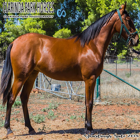 NAAMAH is an Art Major filly out of mare Ark Elaine. She was presented and sold at the horse auction at Bathurst Goldcrown Yearlings Sale 2018.
