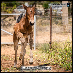 Alta Christiano filly out of Emseven