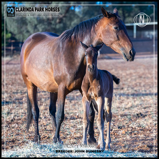 Clarinda Park Horses | Foals 2019 | VINCENT out of MYRA MARY