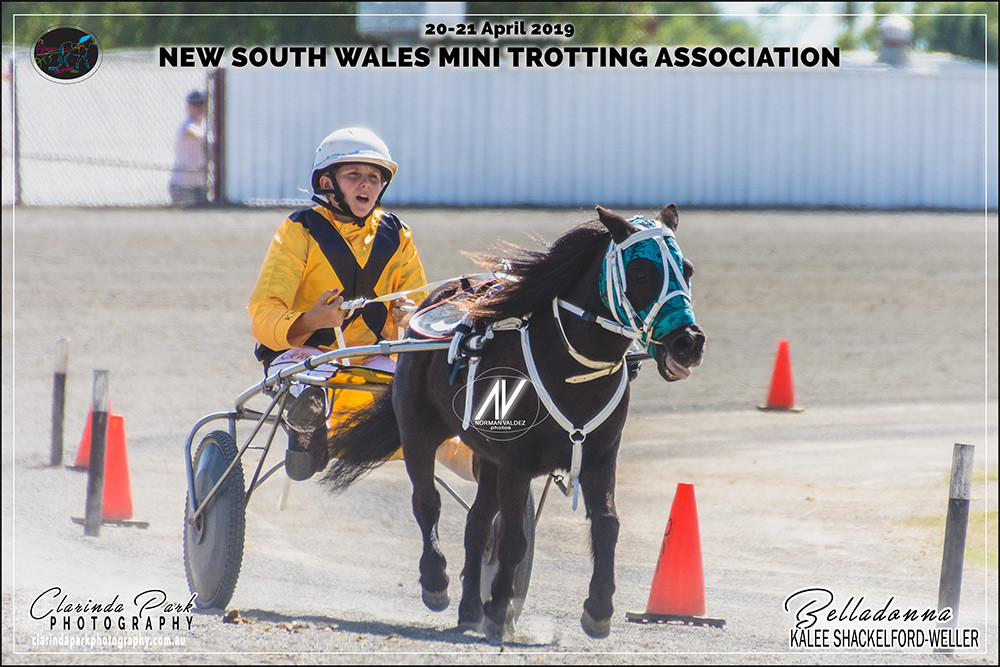 Midget Champion Kalee Shackleford-Weller with Belladonna during the NSW Mini Trots Championships 2019
