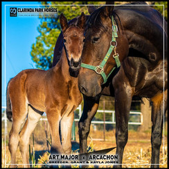 Art Major filly out of Arcachon