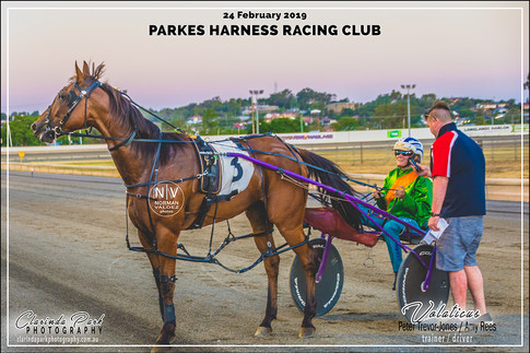 R4 TERRY BROTHERS CARPET COURT Pace - VOLATICUS - Amy Rees - 104
