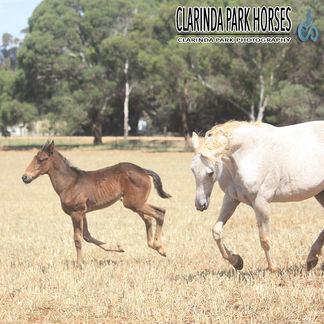 "Horse Foals Photo 2015 - ""ELVIS"" - Arocknroll Dance x Gloria Lombo"