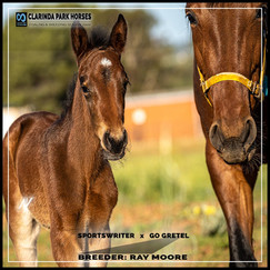 Sportswriter filly out of Go Gretel