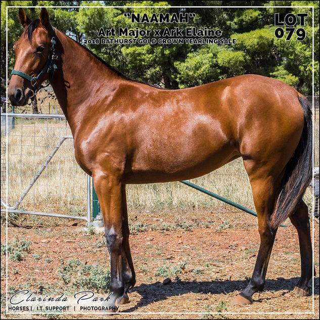 Bathurst Gold Crown 2018 Yearlings Sale - Lot 079 - Art Major x Ark Elaine