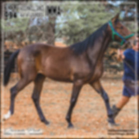 2019 Bathurst Gold Crown Yearlings Sale. Lot 94 (A Rocknroll Dance x Lourdes)