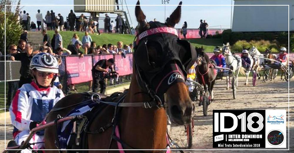 Mini Trots Inter Dominion 2018 (ID18) Pony Division winner, Velvets Little Star driven by Grace Panella