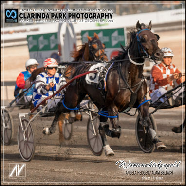 28 DECEMBER 2019 - Parkes Harness Racing Club Race Meeting - Womenwhiskyngold driven by Angela Hedges, and trained by Adam Bellach.