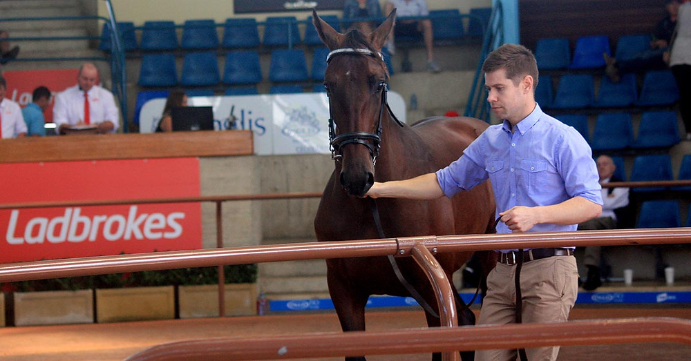 Matthew Dwyer leading Elvis in the auction ring