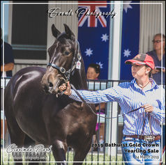 2019 Bathurst Gold Crown Yearlings Sale
