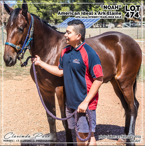 2019223 CLARINDA PARK HORSES - Yearling Sale 2019 - APG 2019 - Noah - 3rd Bath - 012