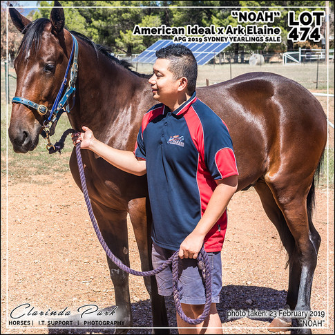 2019223 CLARINDA PARK HORSES - Yearling Sale 2019 - APG 2019 - Noah - 3rd Bath - 012