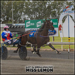 MISS LEMON, driven by Isobel Ross, wins at Parkes Harness