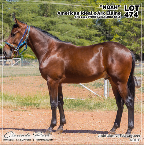 2019223 CLARINDA PARK HORSES - Yearling Sale 2019 - APG 2019 - Noah - 3rd Bath - 008