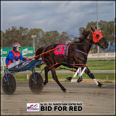 Parkes Harness Race Winners: BID FOR RED driven by Stephanie Burley