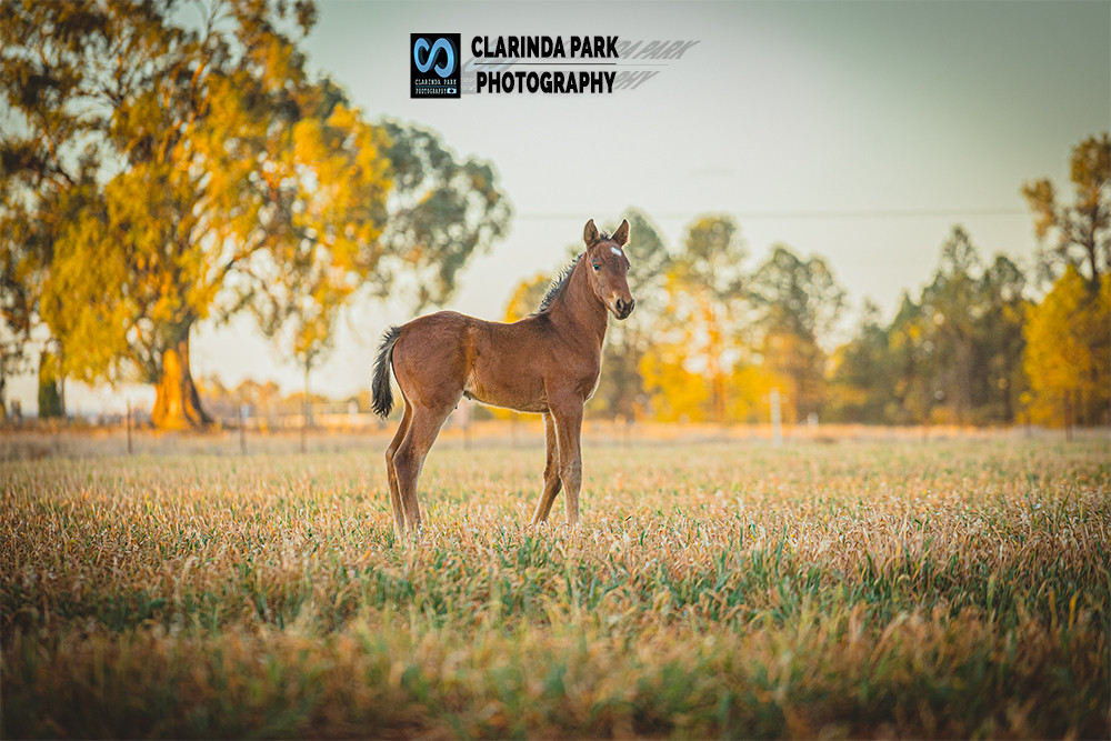 """David"", a colt by Shadow Play out of Tanamay 