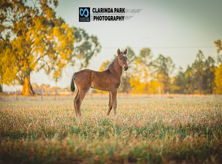 Clarinda Park Horses Welcomes 28 Foals This 2019 Horse Breeding Season