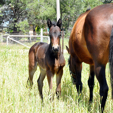 Horse Breeding Season 2016. Horses and foals born durng the horse breeding season 2016.