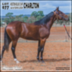 2019 Bathurst Gold Crown Yearlings Sale. Lot 77 (Heston Blue Chip x Soho Leigh)
