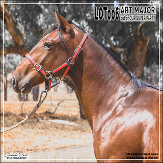 2019 Bathurst Gold Crown Yearlings Sale - Lot 006