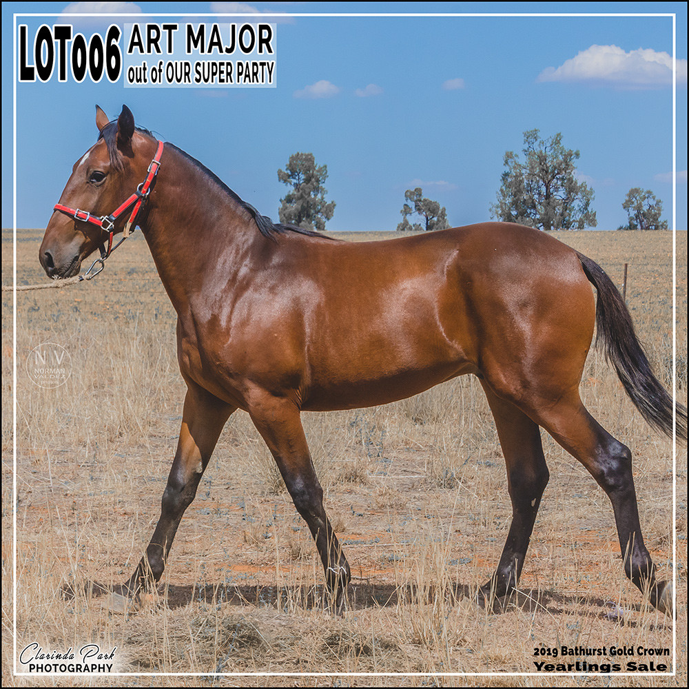 a colt by Art Major out of Our Super Party NZ. Lot 6 in 2019 Bathurst Gold Crown Yearlings Sale at Bathurst Harness Racing Club.