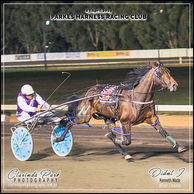 03 APRIL 2019 - Parkes Harness Racing Club - Didnt I driven by Kenneth Wade