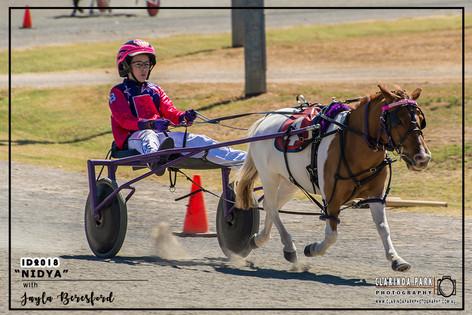 Mini Trots Inter Dominion 2018 - NSW Mini Trots Shetland Division Representative - Jayla Beresford driving Nidya