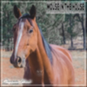 Mouse In The House | Clarinda Park Horses | Clarinda Park Photography | Adopt A Horse